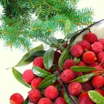 Bayberry Fragrance Oil