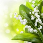 lily of the valley scent