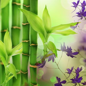 bamboo scent