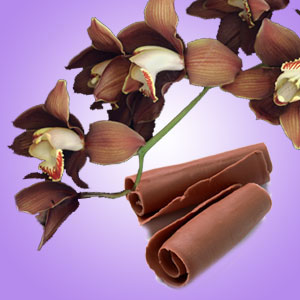 Chocolate Orchid Fragrance Oil