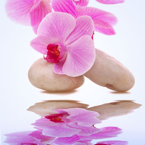 Orchid Rain Fragrance Oil