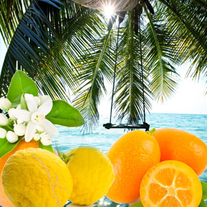Palm Island Fragrance Oil