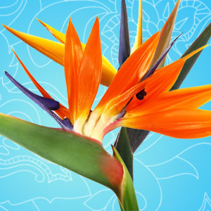 Birds of Paradise Fragrance Oil