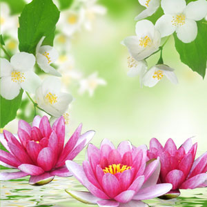 NG Water Lily & Jasmine Type Fragrance Oil
