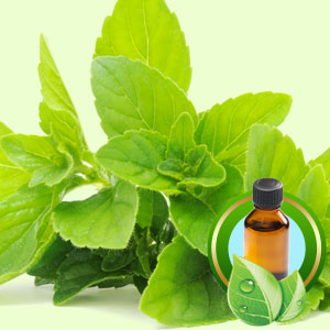 Peppermint (Redistilled) ESSENTIAL OIL