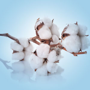 Clean Fresh Cotton Fragrance Oil
