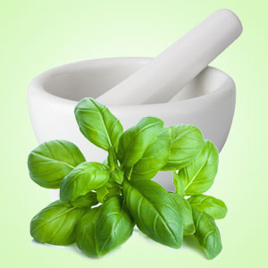 Fresh Basil Fragrance Oil