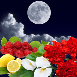 Lunar Eclipse Fragrance Oil