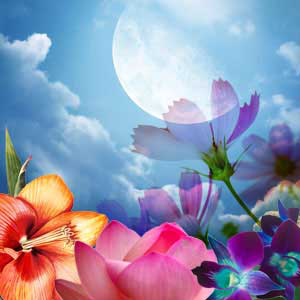 Moon Flower Fragrance Oil