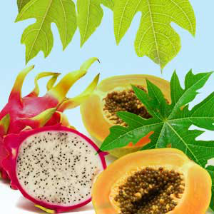 Papaya Dragon Fruit  Fragrance Oil