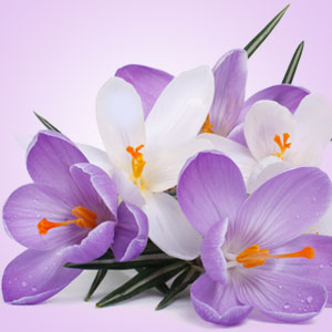 Poison Crocus Fragrance Oil