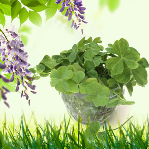 4 Leaf Clover Fragrance Oil