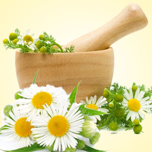 Chamomile Fragrance Oil