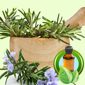 Rosemary Tunisian ESSENTIAL OIL