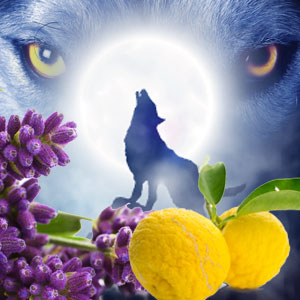 Werewolf Fragrance Oil