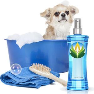 Pet Fragrances 2010